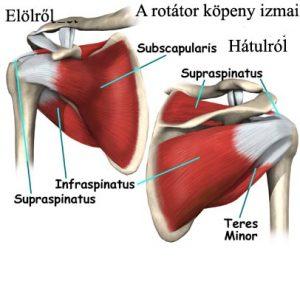 A rotátor köpeny részei