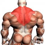 A csuklyásizom (trapézizom) edzése