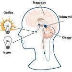 Triptofán – álmatlanság ellen is hatásos